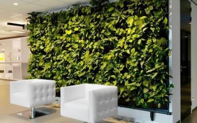 Groot groen in het interieur